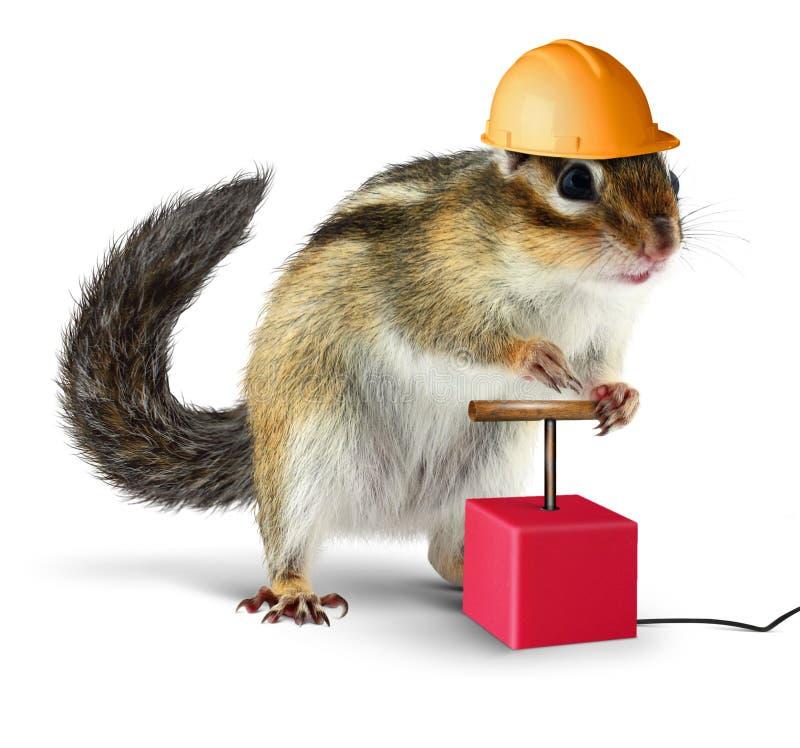 Funny chipmunk with detonator isolated on white stock image