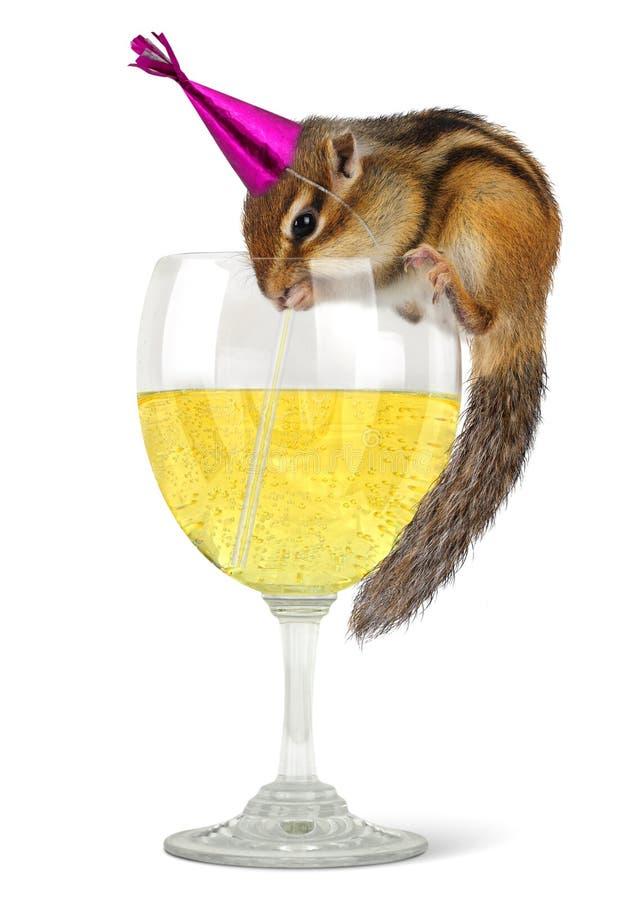 Funny chipmunk dress celebrat hat stock photography