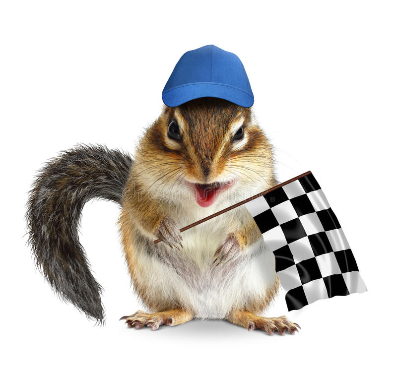 Funny chipmunk with racing flag isolated on white. Funny chipmunk with racing flag on white royalty free stock photos
