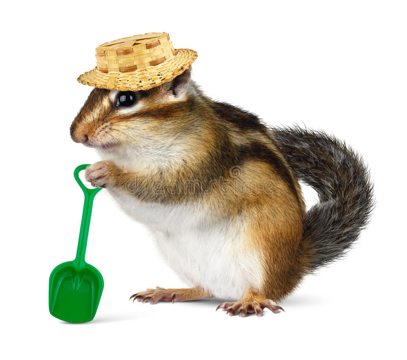 Funny chipmunk with straw hat and shovel royalty free stock image