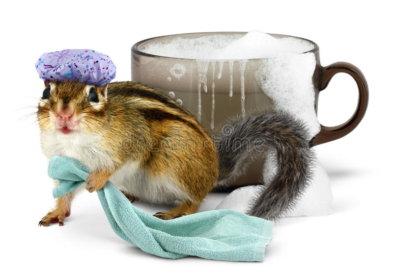 Funny chipmunk taking a bath stock photography