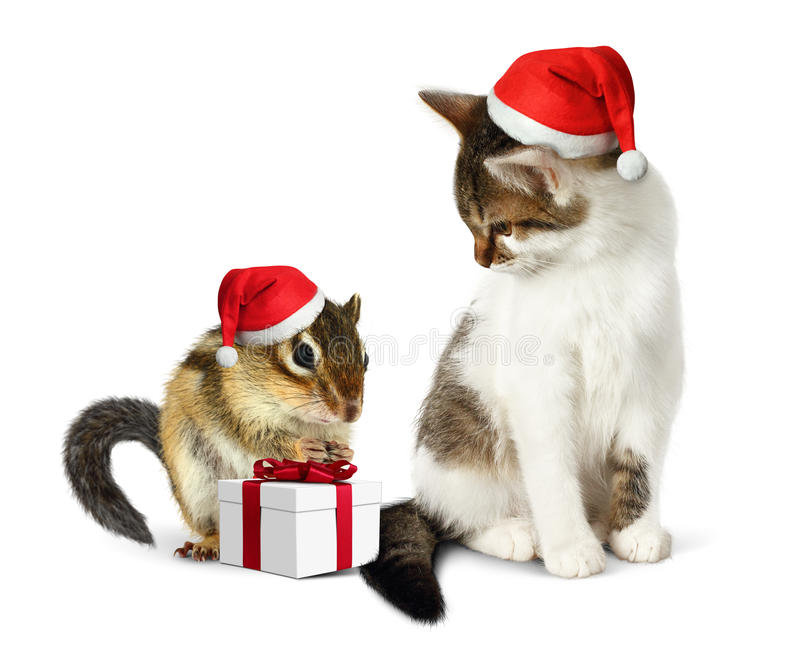 Funny christmas pet, funny squirrel and cat with santa hat and g. Funny christmas pet, funny squirrel and cat with santa hat royalty free stock photos