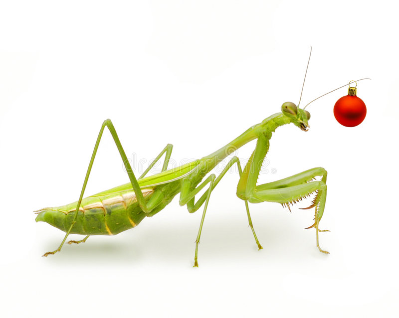 Australian Christmas Red Ornament Insect Royalty Free Stock Image