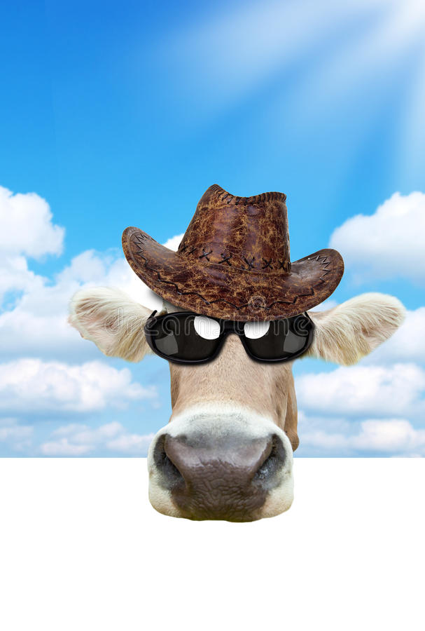 Funny cow. Portrait with free space for your text stock images