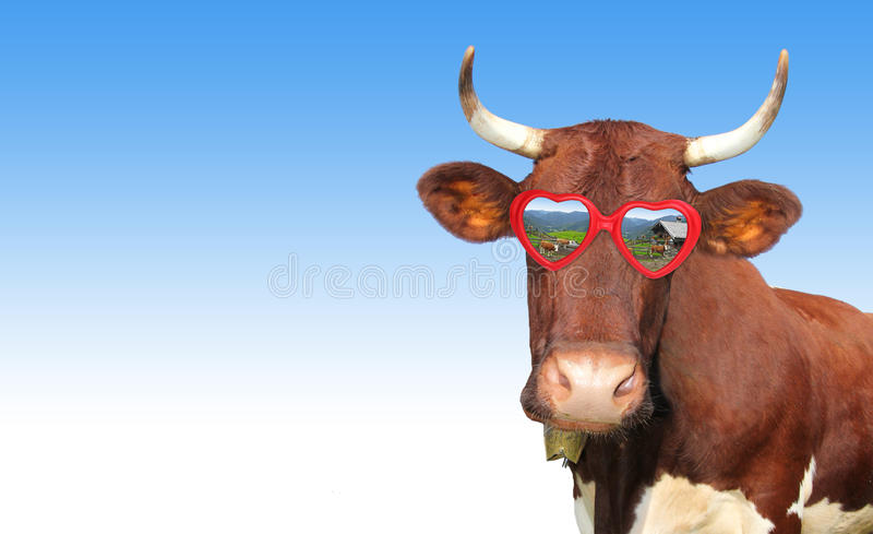 Funny cow with red heart shaped spectacles. Against blue sky royalty free stock images