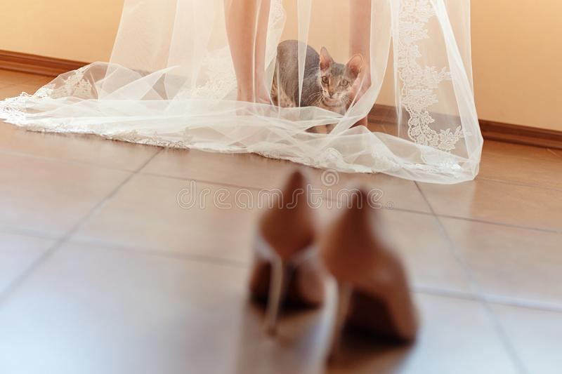 Funny Curious Cat Sits Under The Bride S Veil In The Morning And Looks At The Wedding Shoes Stock Image Image Of Caucasian Lace 157192393