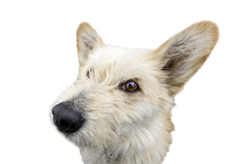 Funny  curious dog looking at the camera stock photo