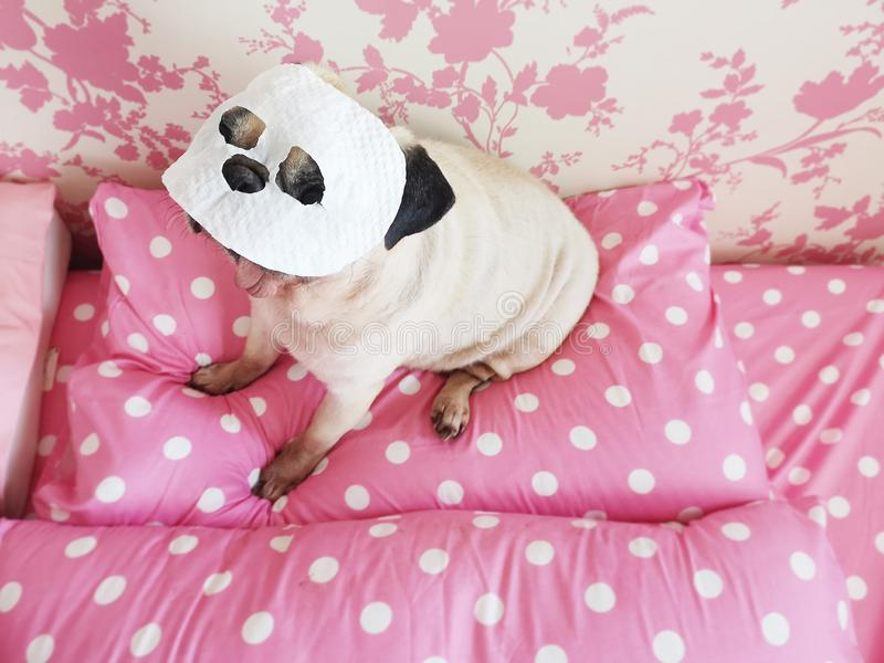 Funny cute pug dog relaxing with beauty mask in spa wellness at home royalty free stock photography