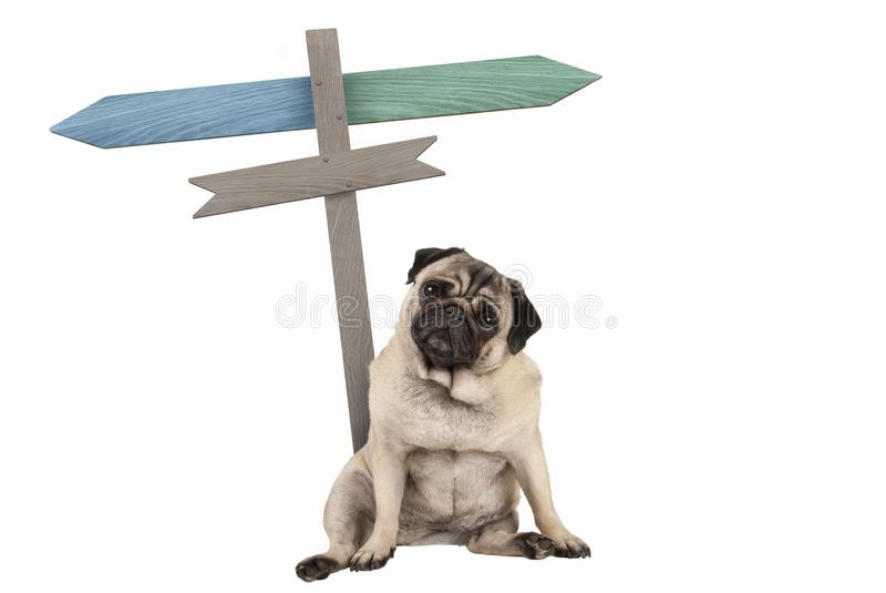 Funny cute pug puppy dog sitting down next to blank signpost; with signs pointing left and right. Isolated on white background royalty free stock images