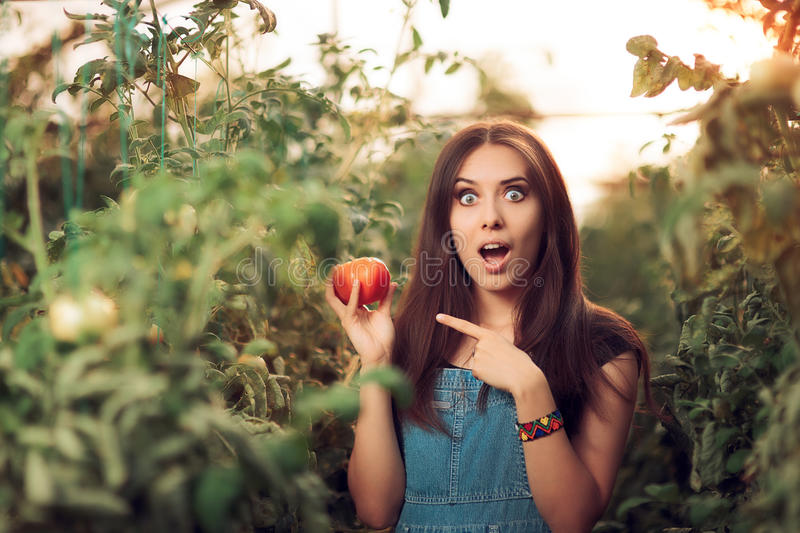 Surprised Farm Girl Holding a Tomato inside a Greenhouse. Funny cute woman in denim jumpsuit working in a glasshouse producing organic food royalty free stock photo