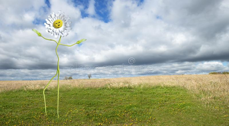 Funny Dancing Daisy Flower Background Man stock photography