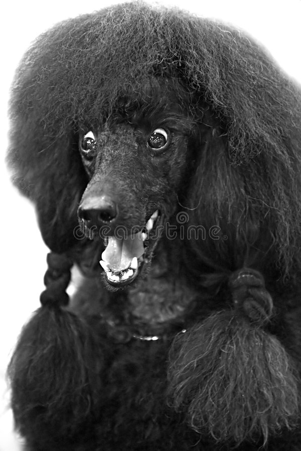 Download Funny dog stock photo. Image of animal, pets, smiling - 6608304