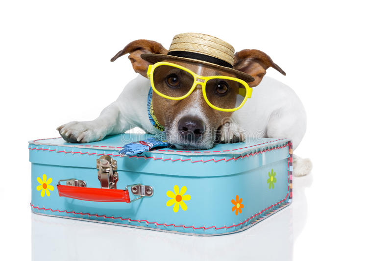 Funny dog as a tourist stock image