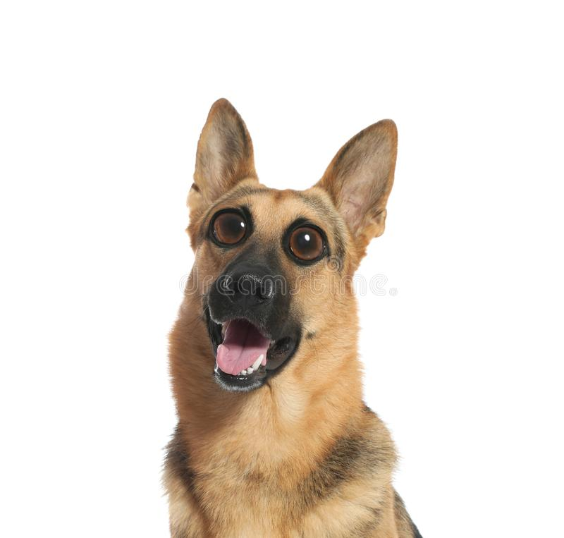 Funny dog with big eyes on white background stock images