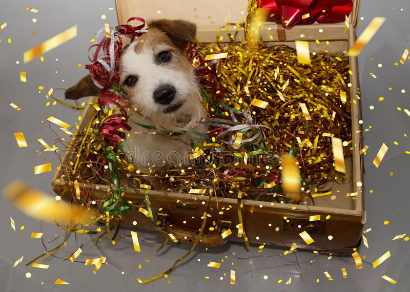 Funny dog birthday, new year or carnival party. Puppy inside of a vintage suitcase with golden serpentines, lights, garlands and stock photo