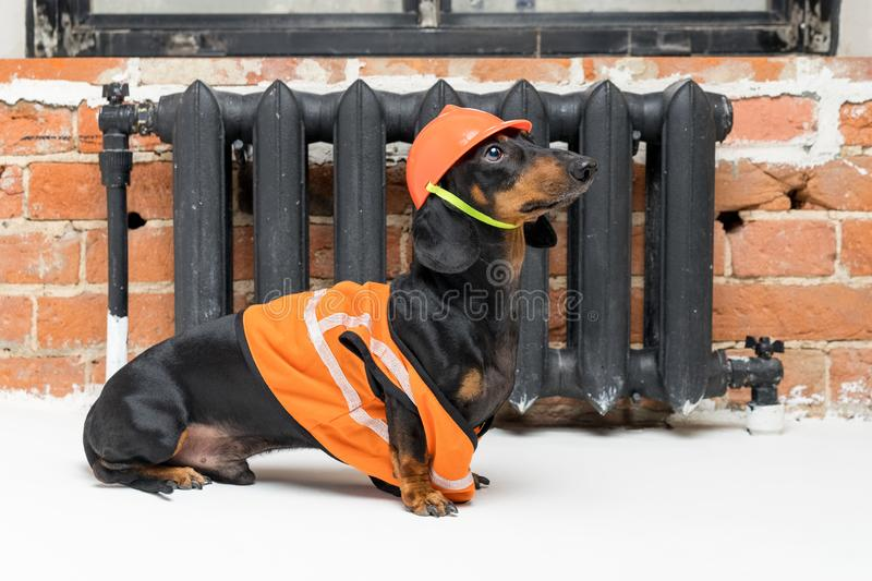 Funny dog builder dachshund in an orange construction helmet and a vest, against a black iron battery royalty free stock image