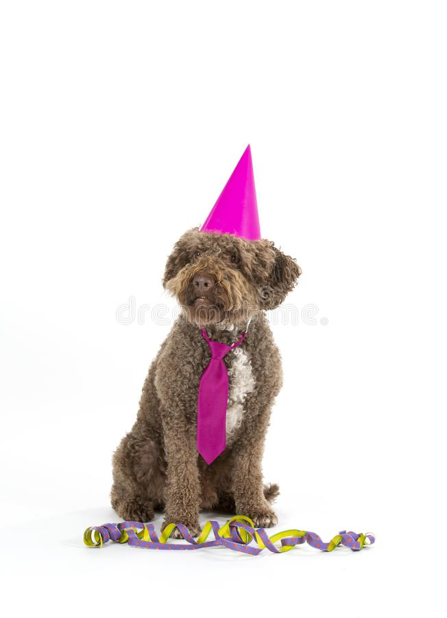 Funny dog celebrate and greeting card concept image. Dog is wearing colorful hat and tie for celebration. Concept image for greeting card concept. Party dog stock photos