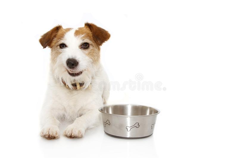 Funny dog food eating making a funny expression with a empty bowl. Isolated on white background stock photo
