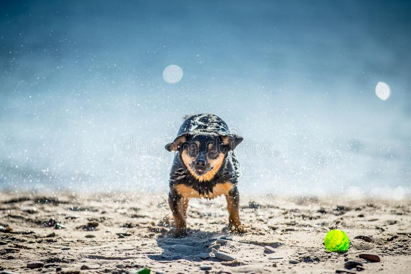 Funny dog games near water, splashing droplets stock photo