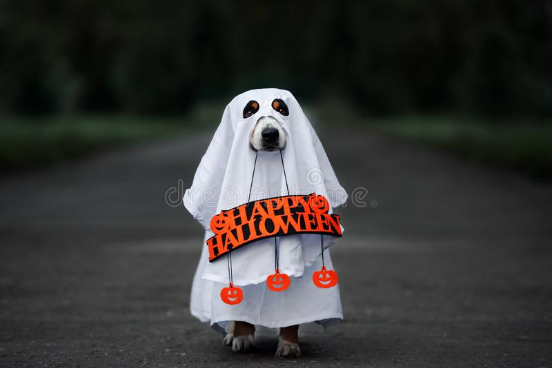 funny dog in a ghost costume with a happy halloween sign royalty free stock image
