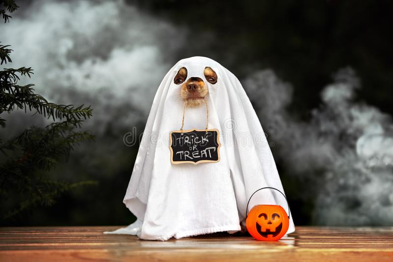Funny dog in ghost costume posing for Halloween royalty free stock images