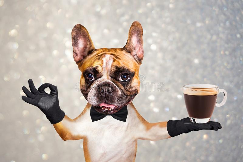 Funny dog ginger french bulldog waiter in a black bow tie hold a glass coffee mug and show a sign approx. Animal on gray royalty free stock photography
