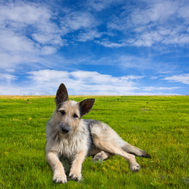 Funny dog on green meadow stock photography