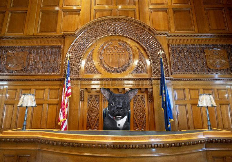 Funny Dog Judge, Courtroom, Law, Court Room. A funny animal pet dog judge sits on a courtroom bench. The court room is where a lawyer will argue a legal case or stock image