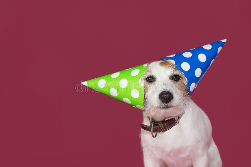 FUNNY DOG PARTY HAT. JACK RUSSELL CELEBRATING A BIRTHDAY,NEW YEAR OR ANNIVERSARY. ISOLATED STUDIO SHOT AGAINST PINK BACKGROUND royalty free stock photography