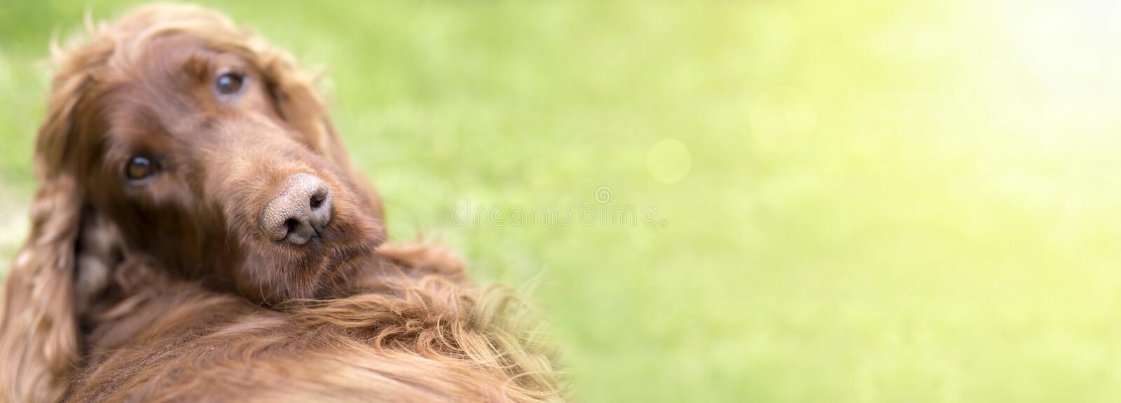 Funny dog puppy banner stock photo