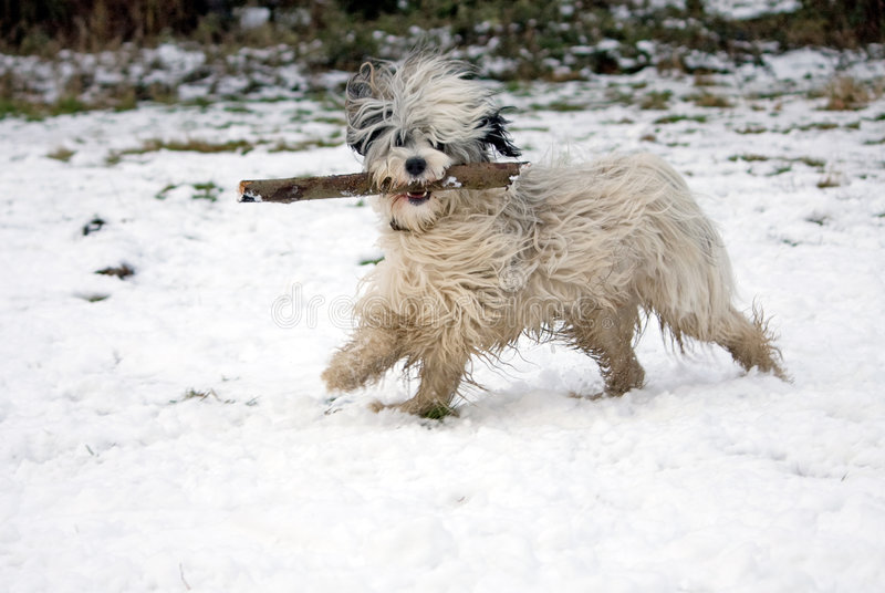 funny dog in snow royalty free stock photos