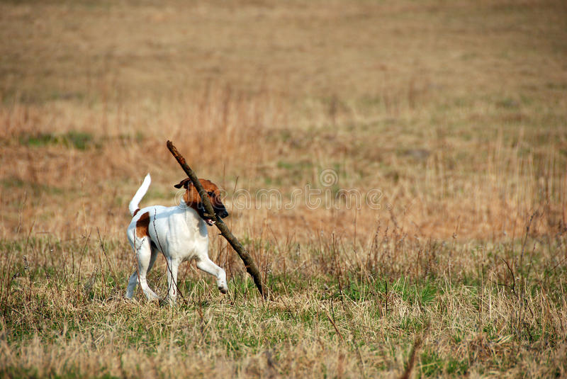 Funny dog with stick
