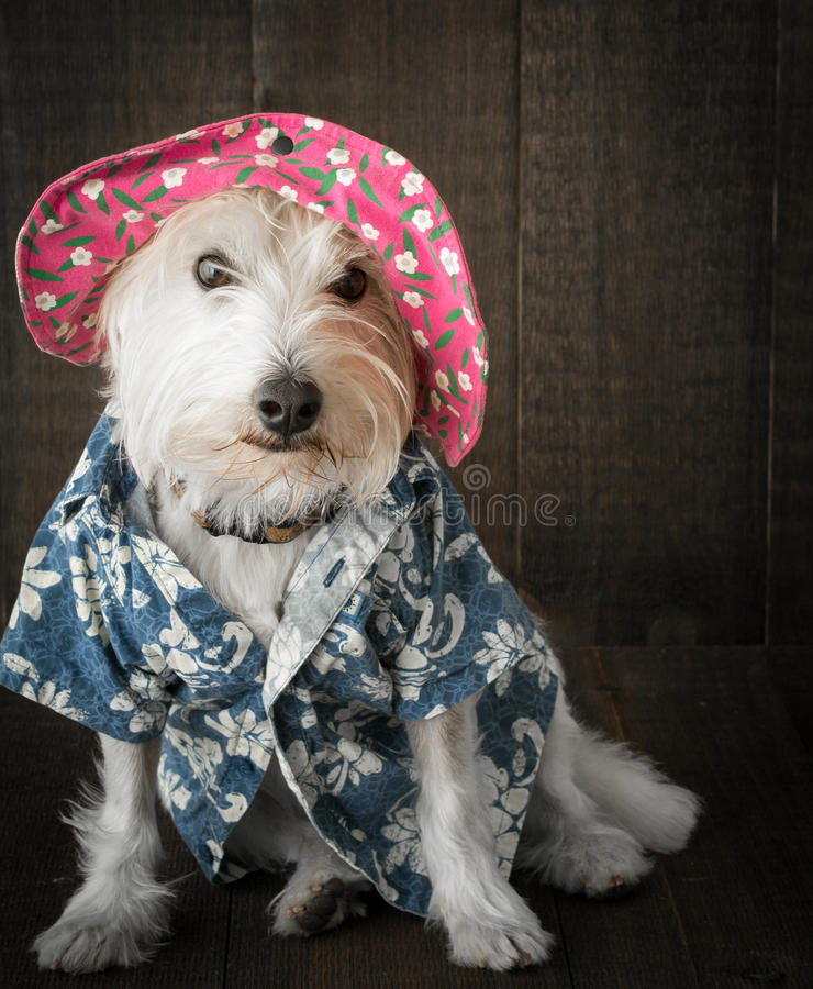 Download Funny Dog wearing hat stock image. Image of flowers, terrier - 27593455