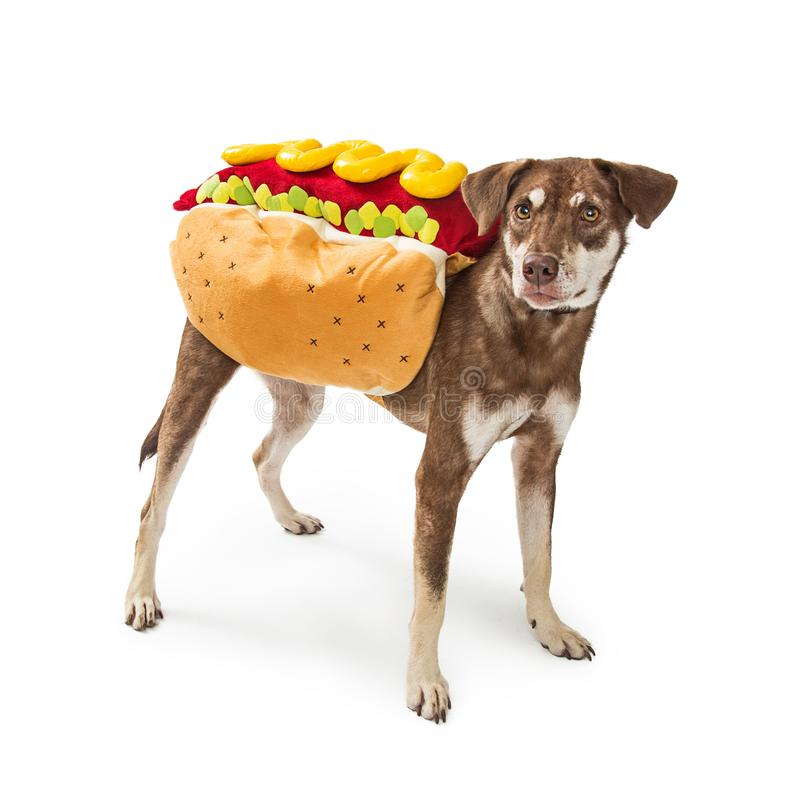 Funny Dog Wearing Hotdog Costume. Funny photo of a dog wearing a hot dog Halloween costume stock images