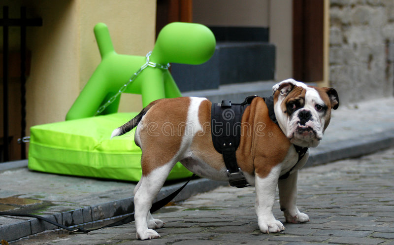 Funny dogs. An ugly dog tied next to a plastic green toy dog in the street royalty free stock images