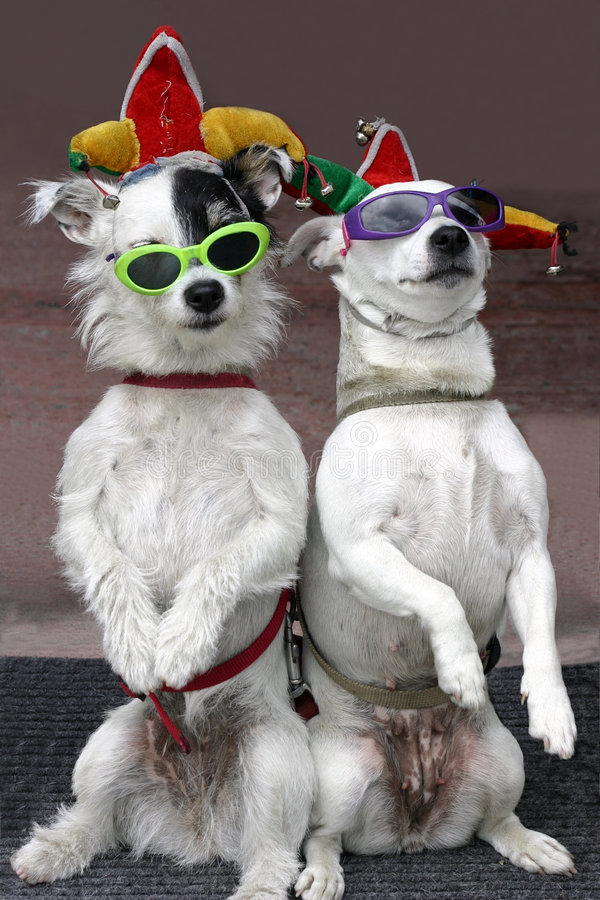 Funny Dogs. Two dogs, wearing sunglasses, are clowning around