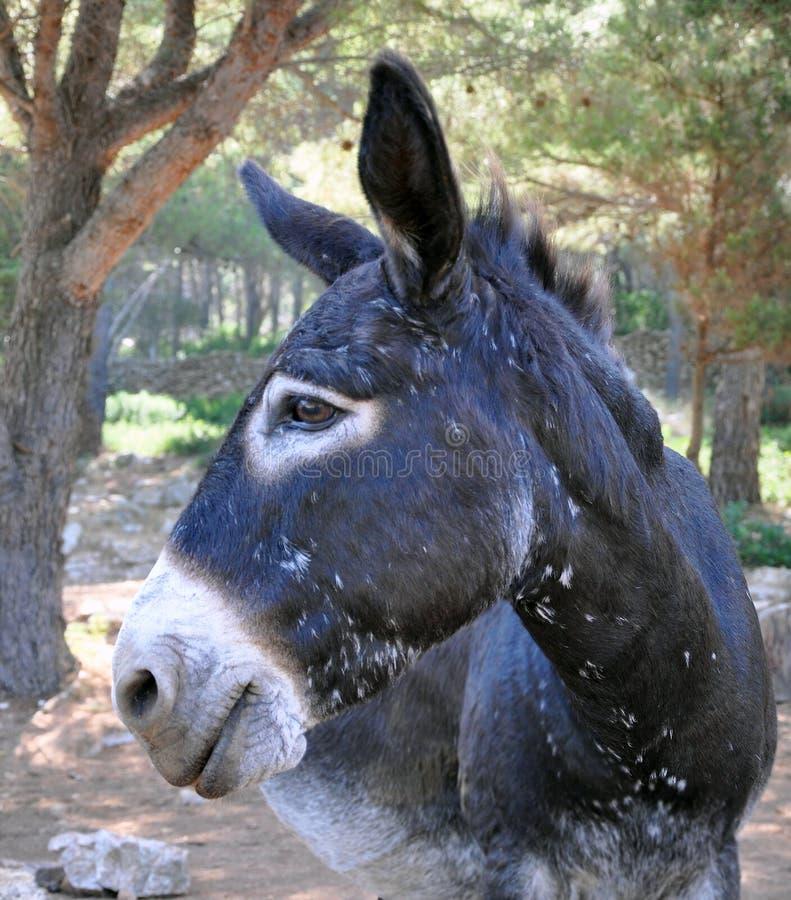 Free Funny Donkey Royalty Free Stock Photos - 19142108