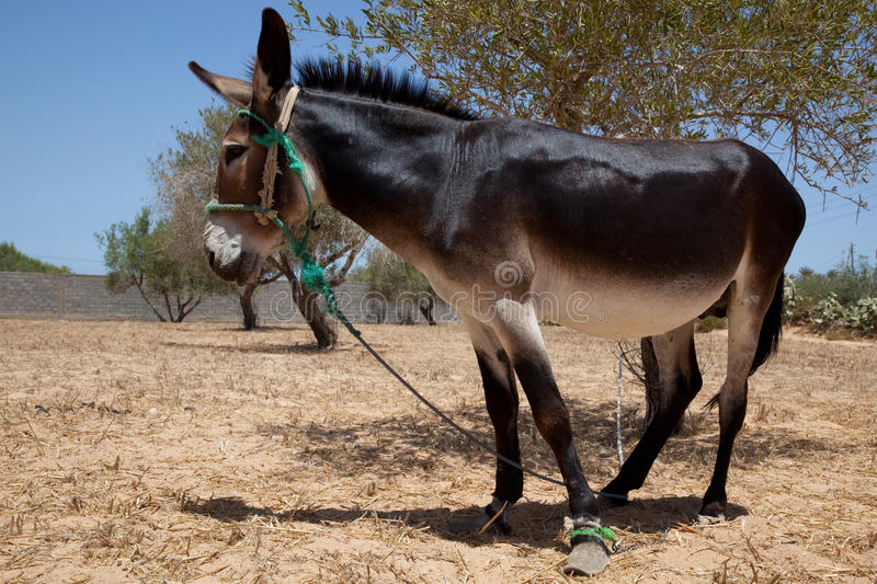 Download Funny Donkey Standing In The Sun Stock Image - Image: 11148557