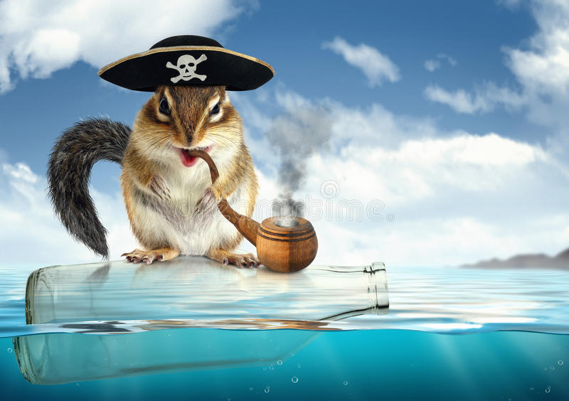 Funny drifting animal pirate, chipmunk with filibuster hat royalty free stock image