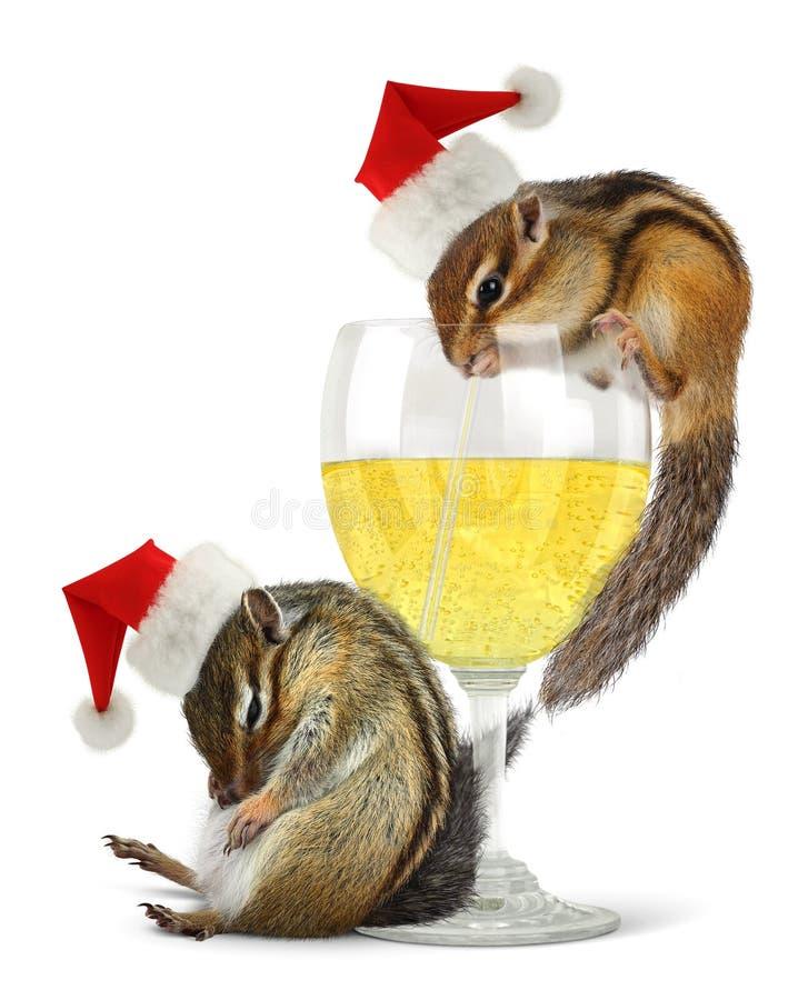 Funny drunk santas, chipmunks dress santa hat royalty free stock images