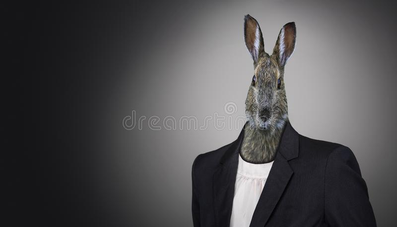 Funny easter bunny wearing a suit, Easter holiday concept. A funny easter bunny wearing a suit, Easter holiday concept royalty free stock images