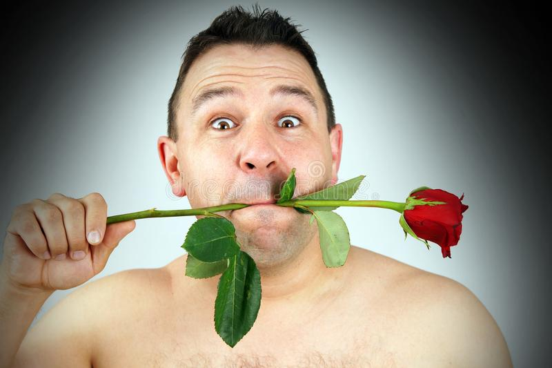 Funny face man with red rose in mouth stock image