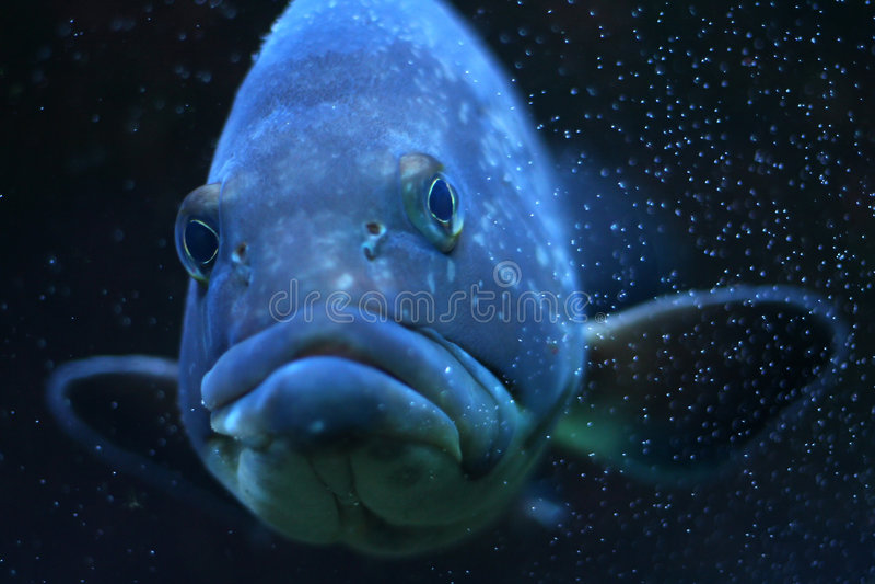 Funny fish stock photography