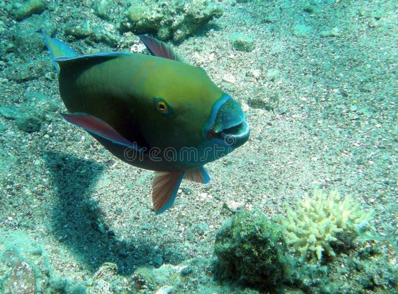 Download Funny fish stock photo. Image of fish, coral, aqua, reef - 9527988