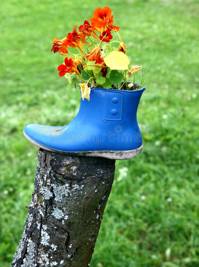 Funny flower decoration. Set in old rubber boot royalty free stock photography