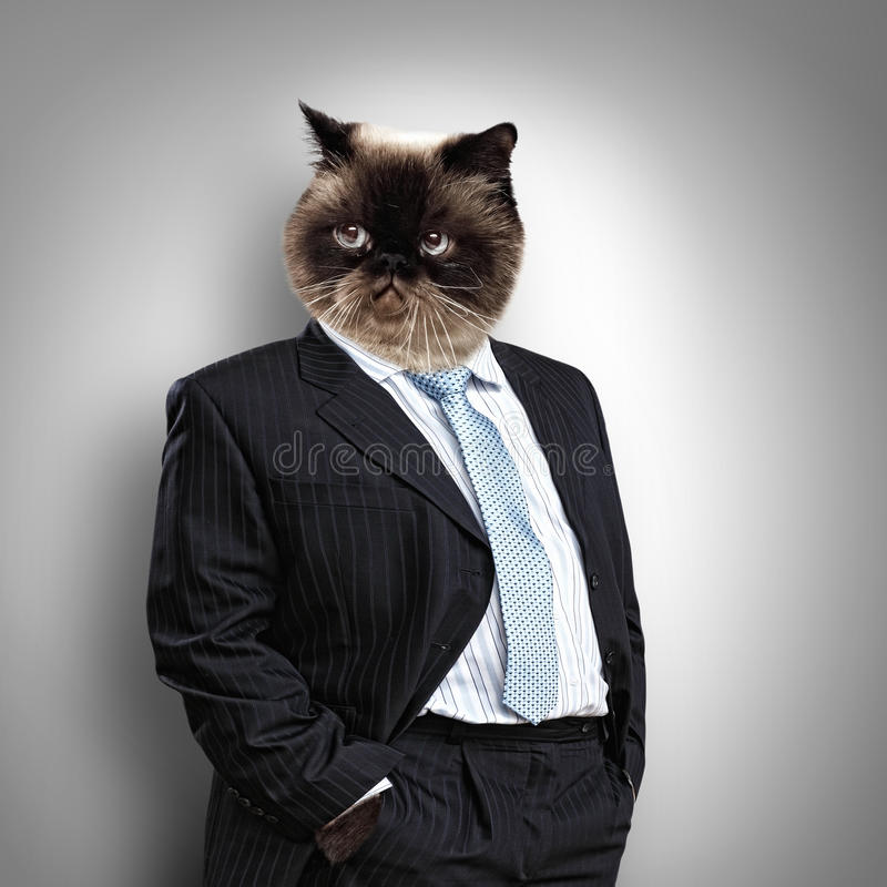 Funny Fluffy Cat In A Business Suit Royalty Free Stock