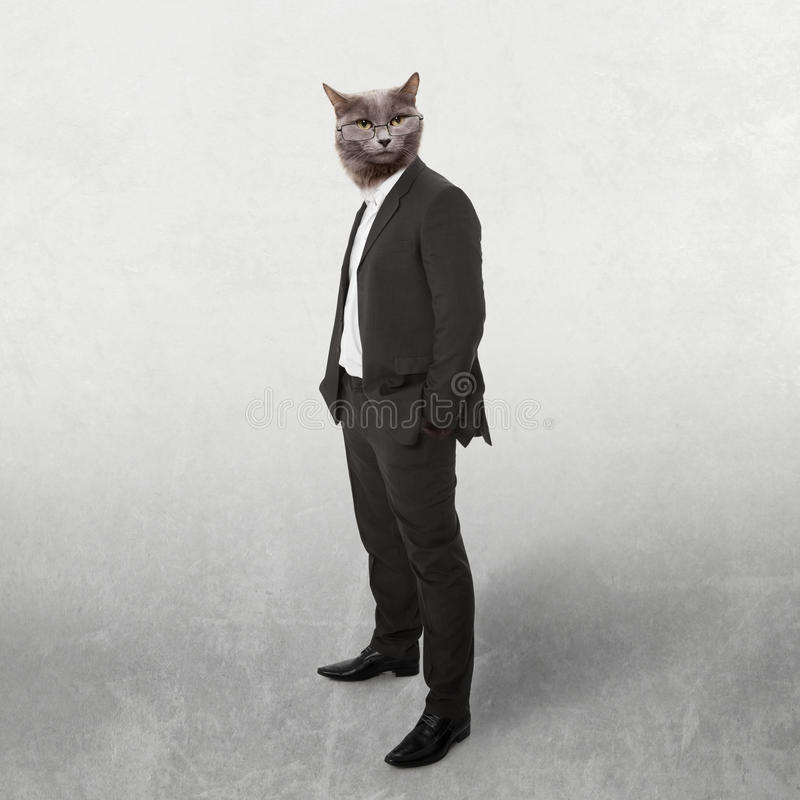 Funny fluffy cat in a business suit businessman. c. Ollage on a grey stock image