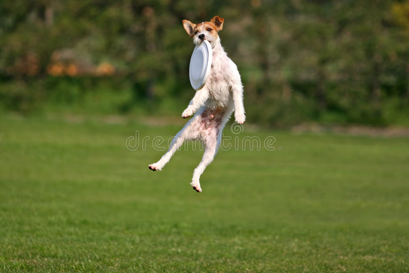 funny frisbee catch 4962194 funny frisbee catch stock photo image of determination 4962194