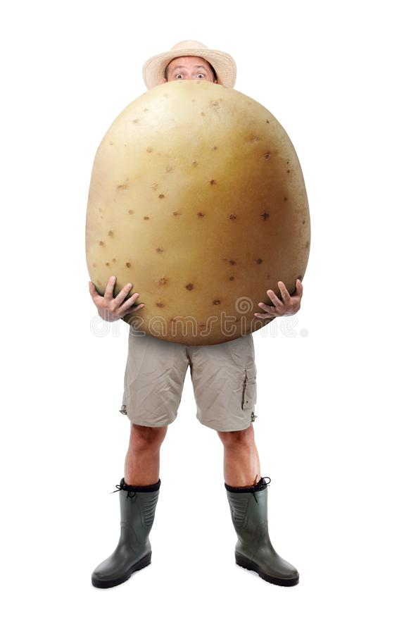 Funny gardener carrying a large potato. A farmer hold big potato isolated on white background. Successful vegetable grower. Large harvest of genetically stock photo