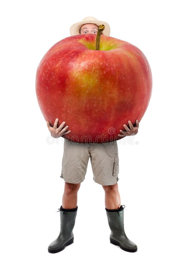 Funny gardener carrying a large red apple. Farmer hold big apple isolated on white background. Successful fruits grower. Large harvest of genetically modified stock image